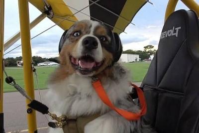 美国一男子带牧羊犬驾滑翔机在空中翱翔